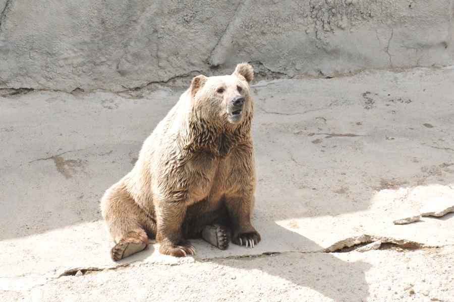 big-bear2