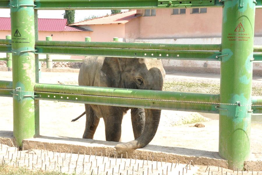 zoo-elephant