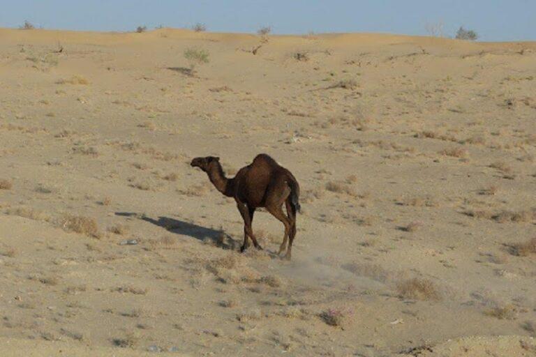 From Desert to Coast Tour