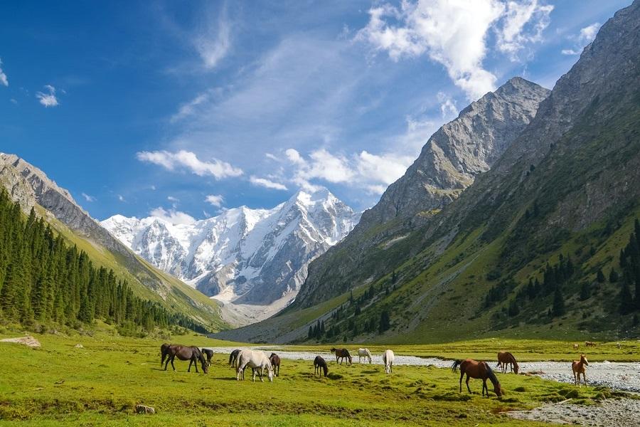 Nature of Kyrgyzstan (7)